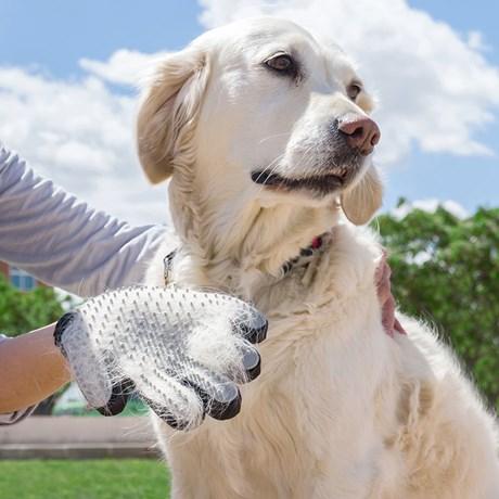 Borsthandske Och Massagehandske För Hundkatt